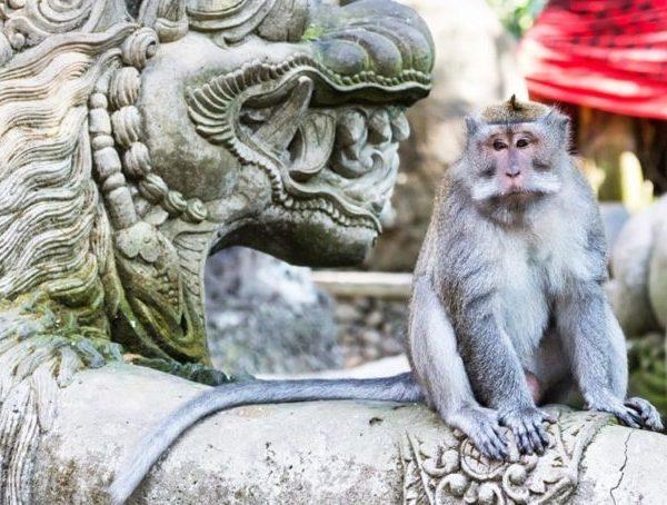 Ubud-Monkey-Forest-1024x454