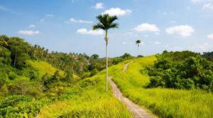 Wisata Bukit Campuhan